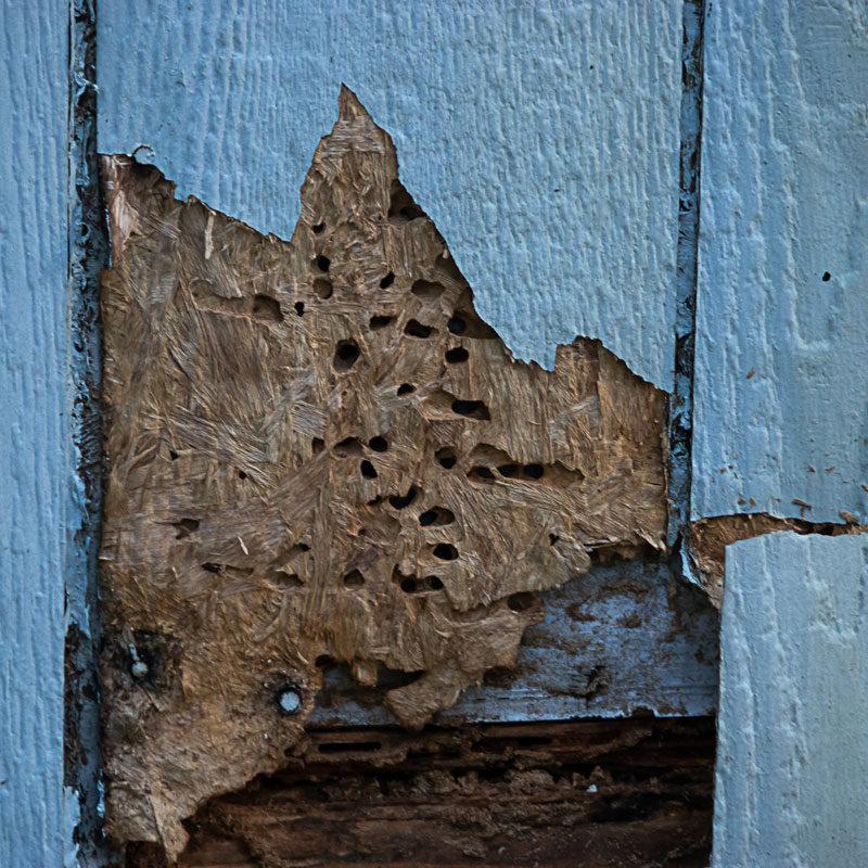 pest-damage